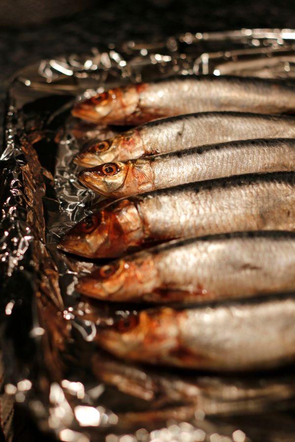 Sardines raw